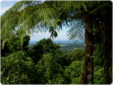 El Yunque rain forrest only 15 mnutes from Villa