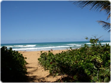 Eco Nature reserve Luquillo